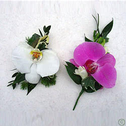 Wedding Orchid Buttonholes